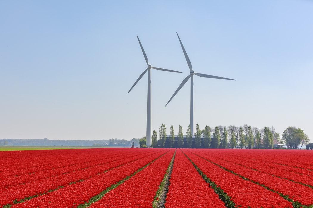 Востребованные специальности в Нидерландах