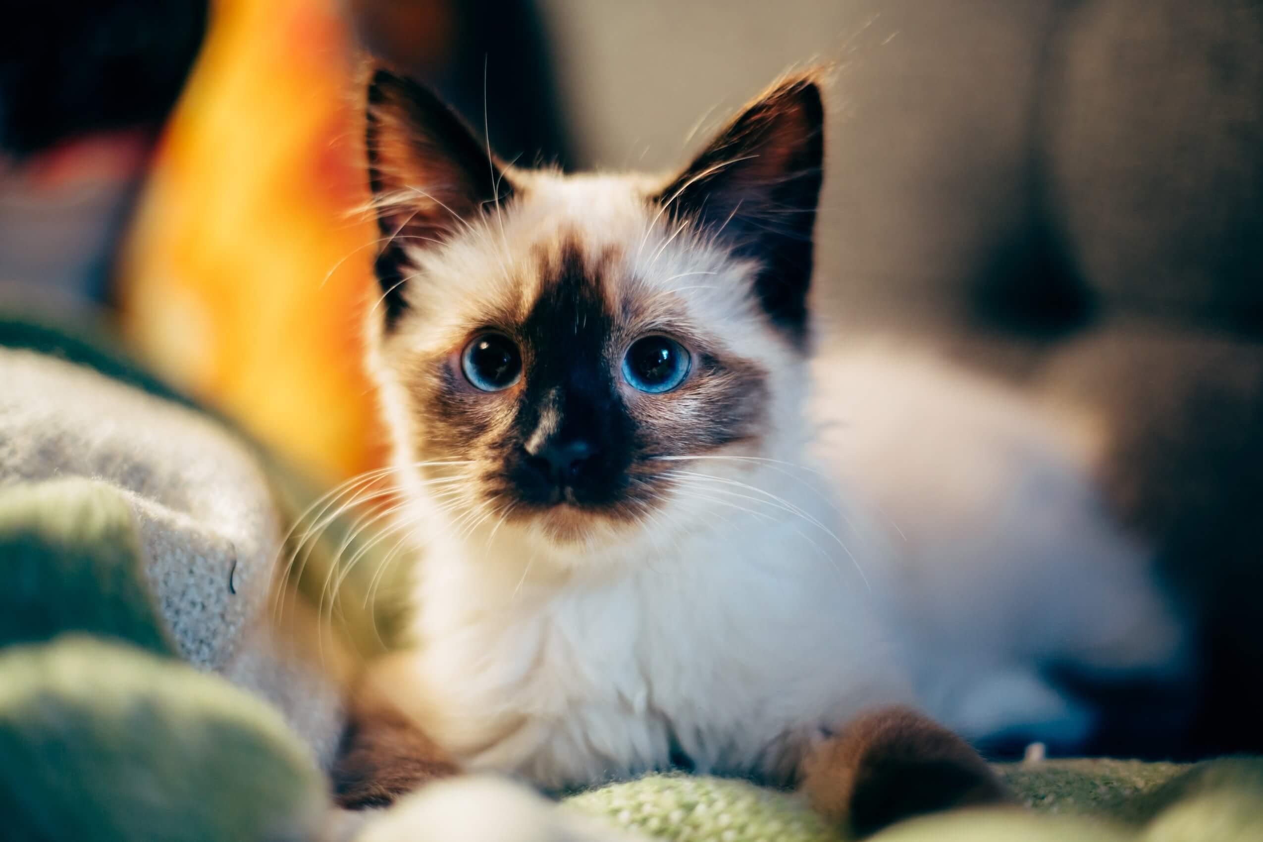 Возможности для волонтерской работы с животными по всему миру